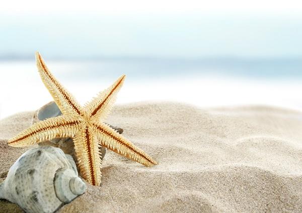 beaches, best beaches, starfish, sand