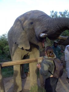 elephant, animals, south africa
