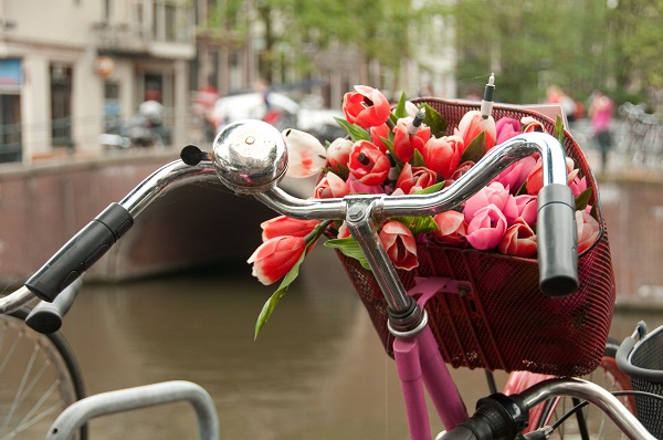 A basket of fresh bouquet of red tulips on a bike