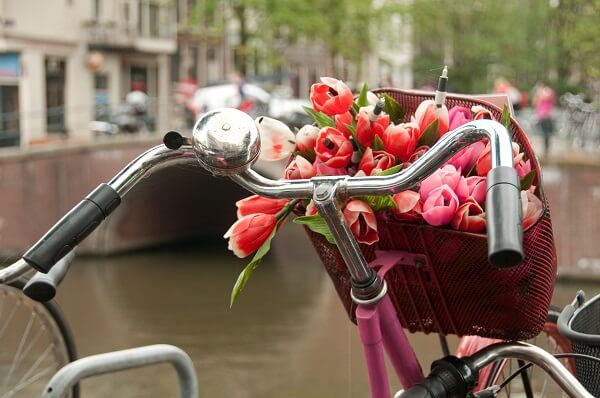 Bicycle with a basket full of tulips parked in Amsterdam