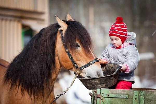 Activity-Child-Feeding-Horse