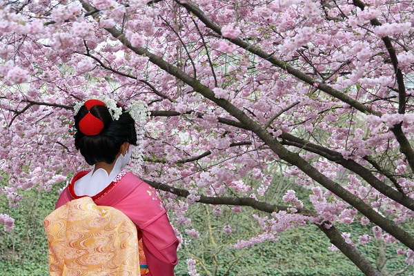 Destination - Japan, Tokyo, Geisha, Blossom