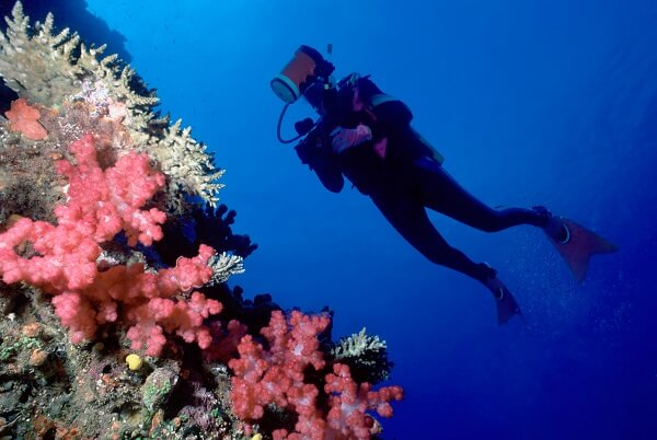 Activity-Scuba-Coral-Fiji