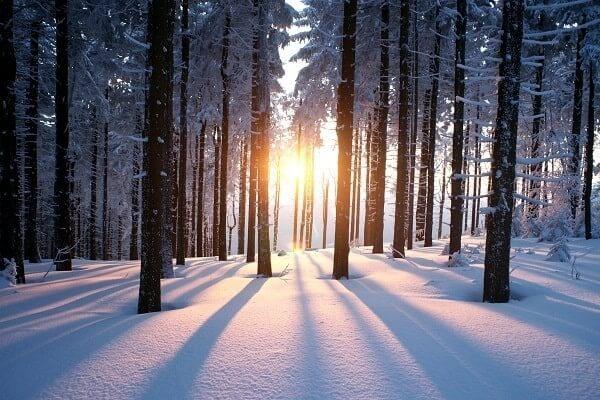 Winter_Woodland